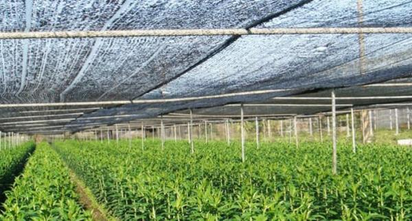 Agriculture Netting